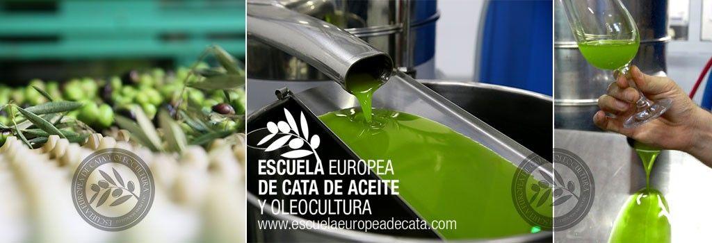 Catas de aceite. Madrid. Evento gastronómico. Cursos de Cata de Aceite de oliva virgen extra. AOVE. Maestro de almazara. Sumiller